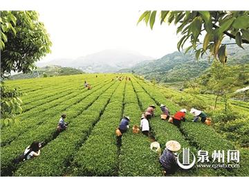 绿色强茶再迈新步
